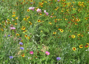 Indian Blanket Mix