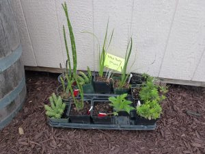 miscellaneous plants for sale