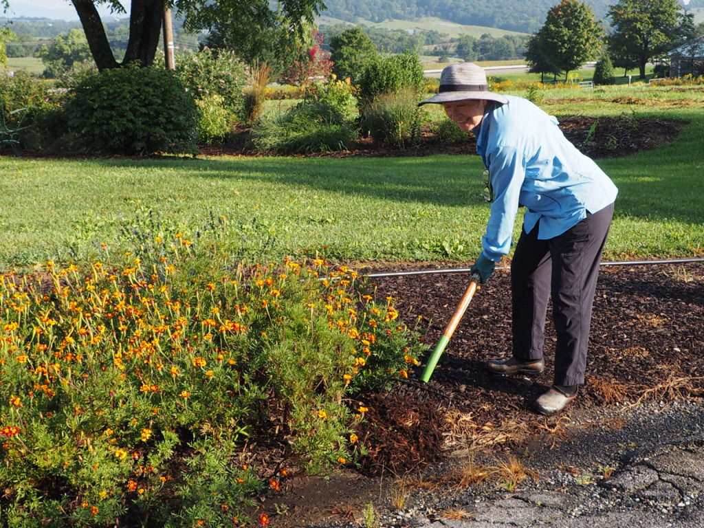 Kathy working in the Gardens