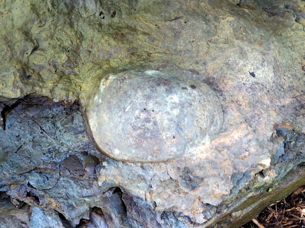 Fossil in Rock Garden